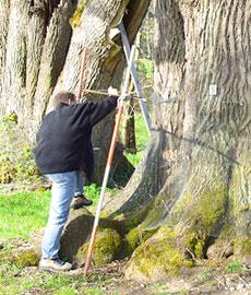 Baumuntersuchung