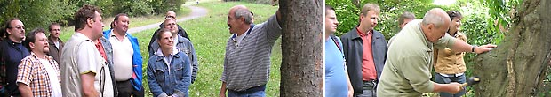Visuelle Baumkontrolle I, VTA
