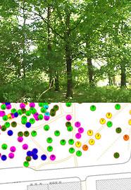 Baumbestandserfassung und Bestandskonzeption