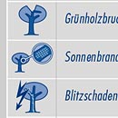 Visuelle Checkliste Baumkontrolle