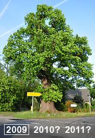 Monitoring von Bäumen