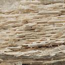 Selektive Weißfäule - Holzerweichung