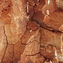 Braunfäule - Holzversprödung