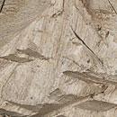 Simultane Weißfäule - Holzversprödung, Holzerweichung
