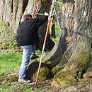 Baumgutachten nach VTA