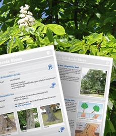 Seiten aus dem Fachbuch Baum-Check